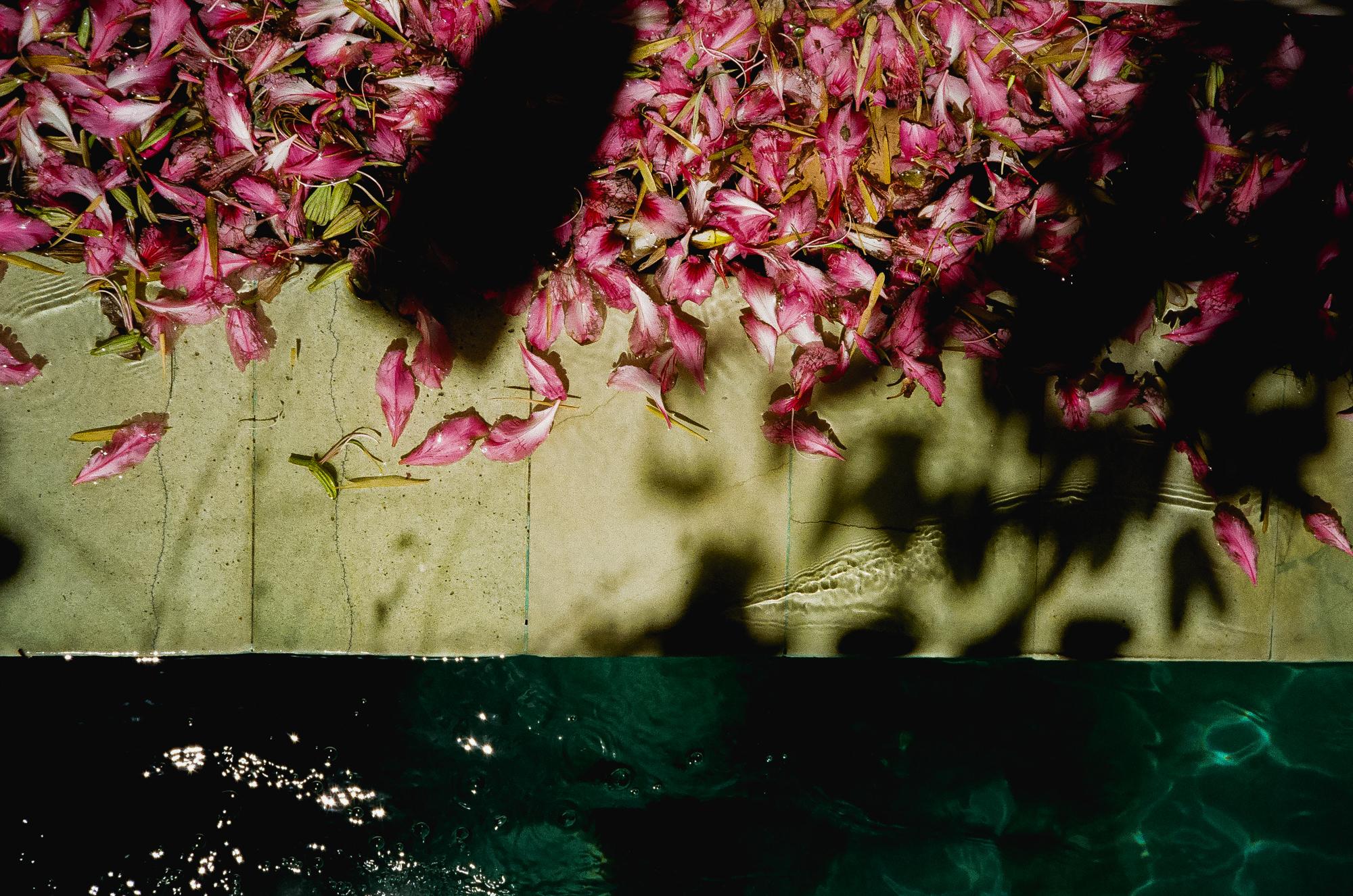 balinese flower petals